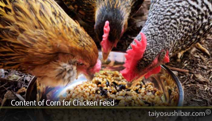 Content of Corn for Chicken Feed